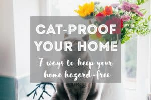 7 Ways to Cat-Proof Your Home   Fluffy Kitty