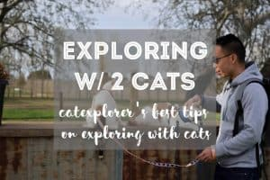 How to Explore with 2 Cats | Fluffy Kitty