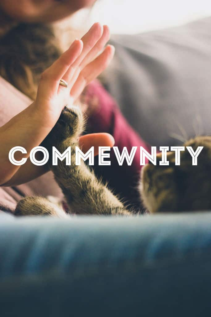 The Cat Community | Fluffy Kitty Blog